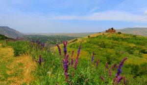 ハブツタルの丘